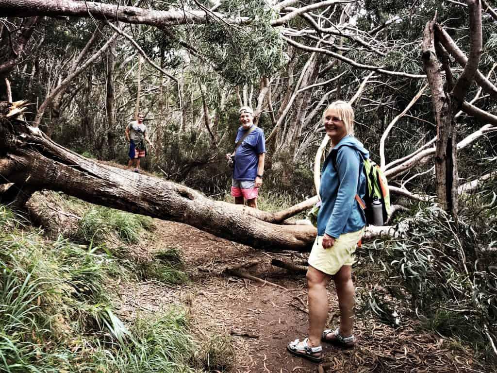 Hindernisse gehören zu den Wanderwegen des Koke'e State Parks dazu. Abenteuer!